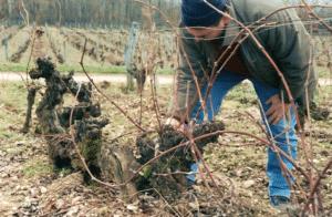 vin du sud ouest cahors clos st jean