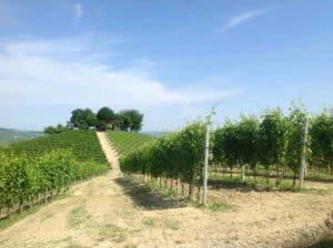 vins italiens barolo grasso santo stefano