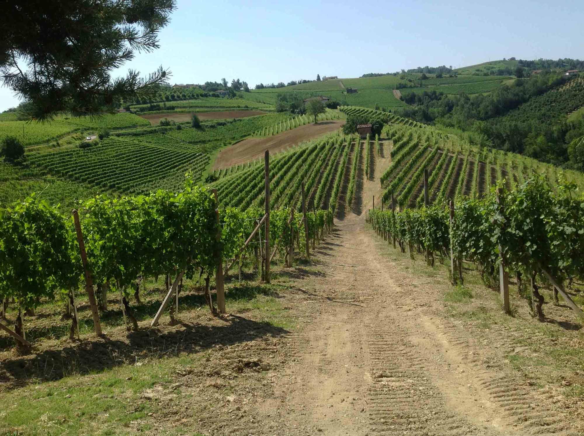 les vins italiens grasso barolo santo stefano