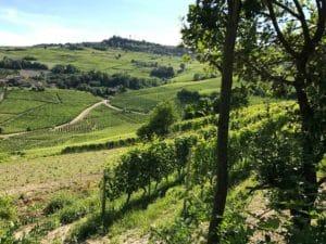 aurelio-settimo-barolo-vin-italien-winebox-prestige-Toulouse