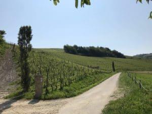 vigne italie barolo boscaretto ferdinando principiano