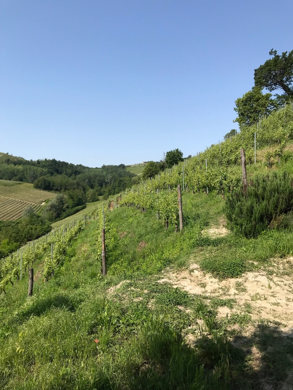 vignoble de barolo en italie