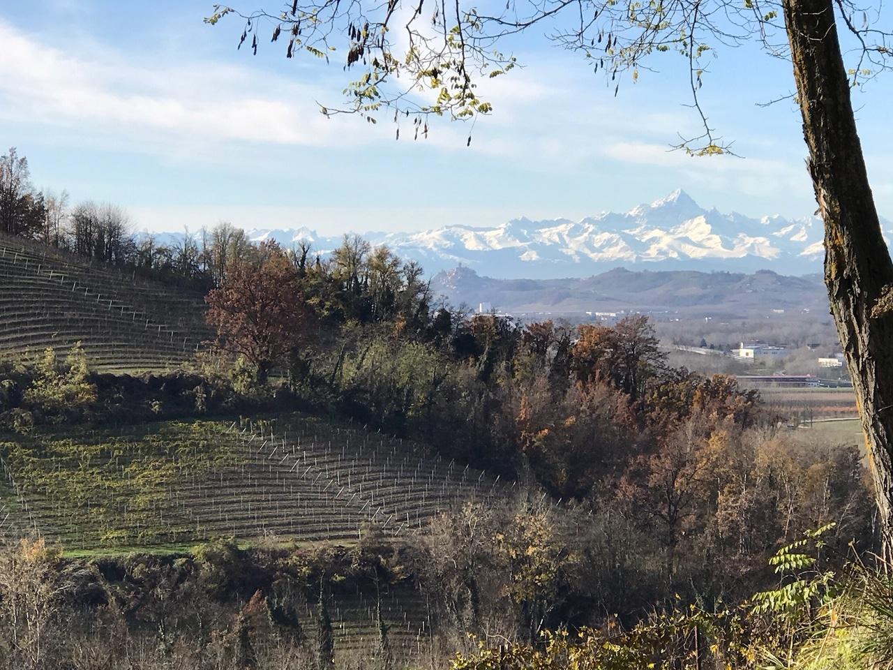 vigne à Barbaresco italie