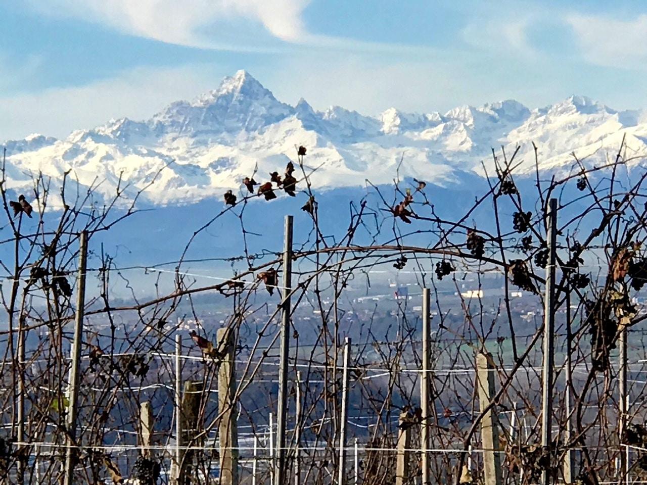 vigne de barolo en italie