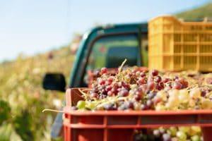 sélection de vin pour l'abonnement box cadeau vin à offrir